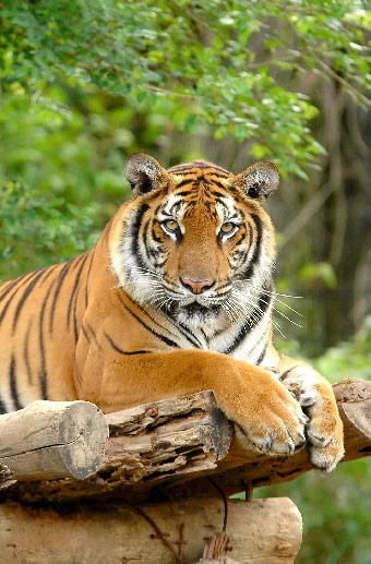 Wildlife Tours in India, Central India Wildlife Safari Tours