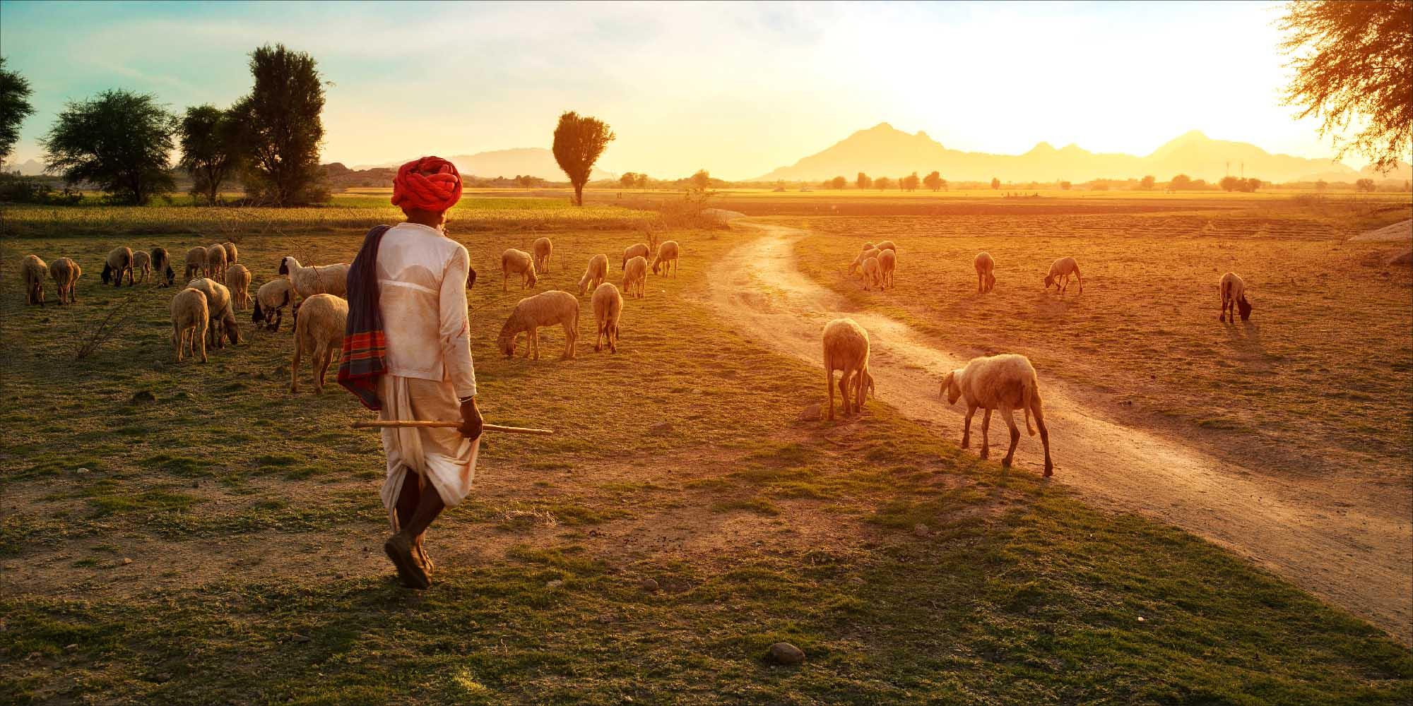 Image result for rural rajasthan