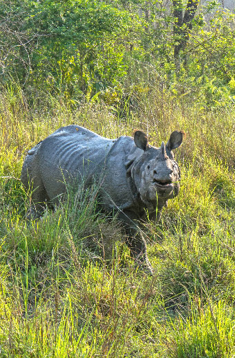 Natural Nepal: Wildlife with Le Passage to India Journeys