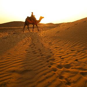 Camel safari in Jaisalmer