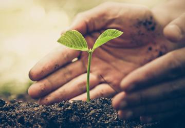 Environmental welfare