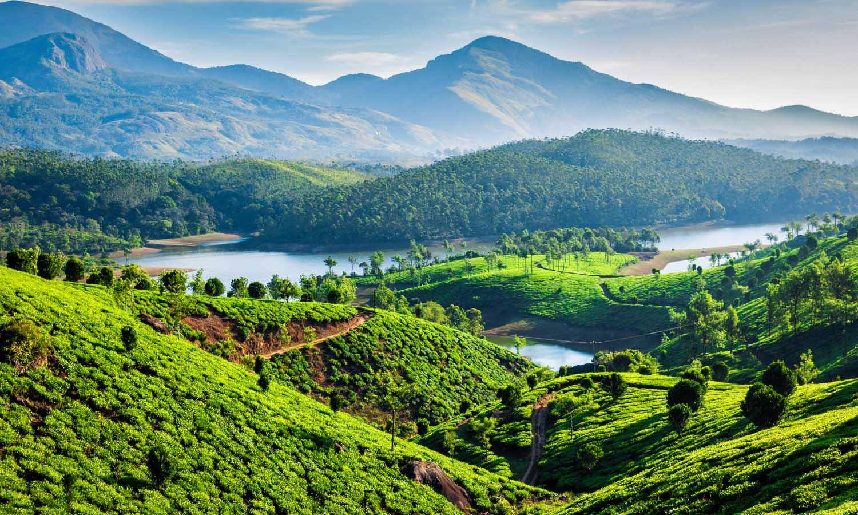 Tea plantations and Muthirappuzhayar River on hills near Munnar, Kerala