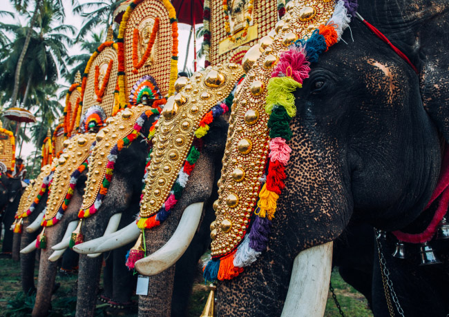 Elephants Decorated at Thrissur Pooram